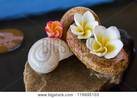 Beautiful Flower Plumeria Or Frangipani And Shell On Water For Spa Meditation Mood