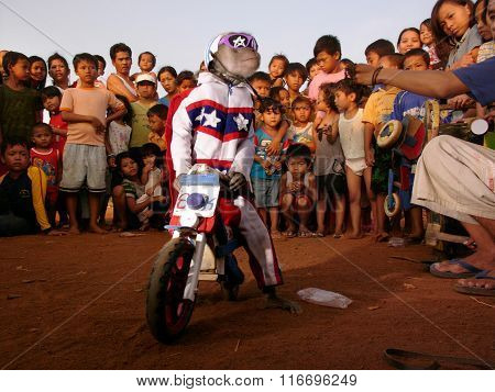 A macaque monkey in a stars-and-stripes Evel Knievel suit performs on a toy wooden motorcycle