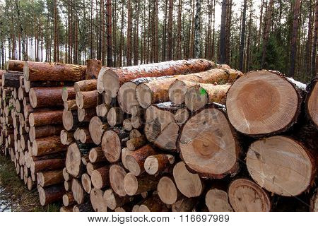 Put Together A Pile Of Wood In The Forest
