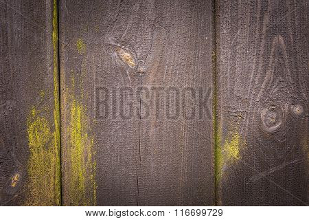 Dark Wooden Wall Background With Green Lichens