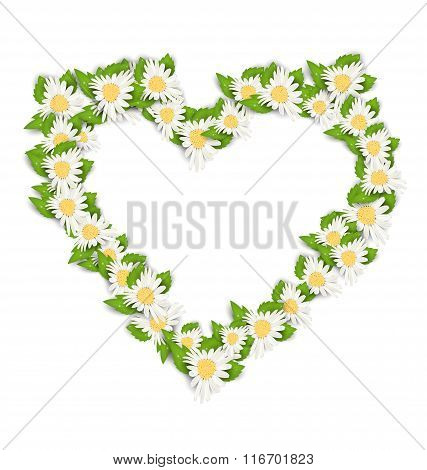 Camomile Flowers in Form Heart Isolated on White Background
