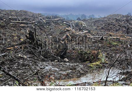 Timber Cutting 123