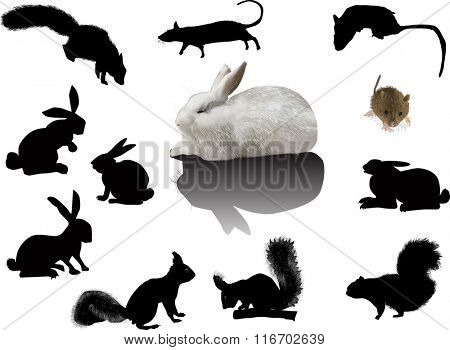 illustration with set of rodents isolated on white background