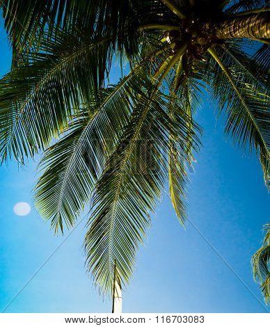 Coconut Getaway Beautiful Grove