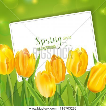 Spring Tulips Flower Background - with Card for your Text - in vector