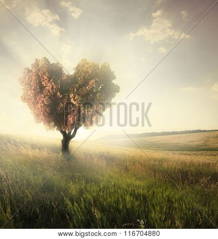 Green field with heart shape tree under blue sky. Valentine concept background