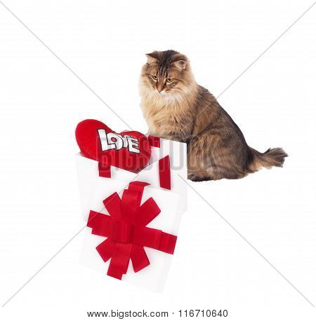 Cat About White Gift With Red Heart