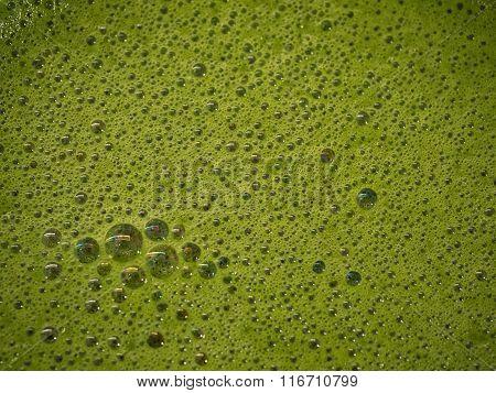 Macro Matcha Latte Cup of green tea