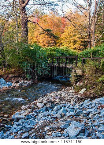 Tiny Stream In The Catskills