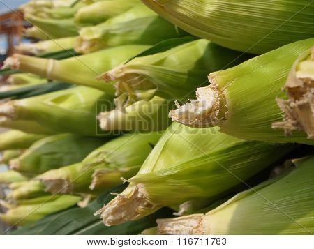 Corn Cobbs Closeup