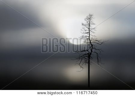 Silhouette Of Bare Tree And Lake At Sunset