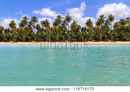 View of a beach from water at Maragogi in Alagoas in Brazil
