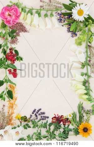 Flower and herb selection used in herbal medicine forming an abstract border over speckled cream paper background.