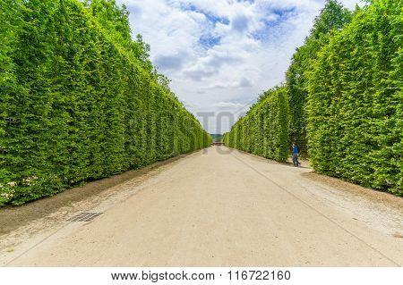 Paris, France June 1, 2015: World famous gardens of Versaille with its magnificient green arrangemen