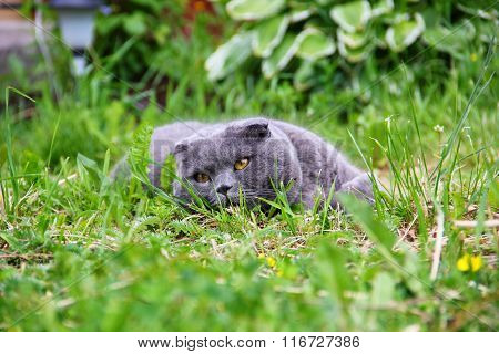 The cat is lying on the grass