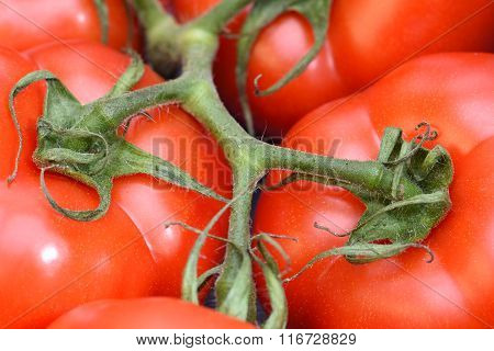 Closeup of bunch red tomatoes