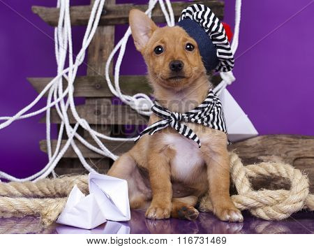 Puppy in a sailor hat