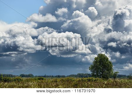 a tree in the field with dramatic rain clouds in the background