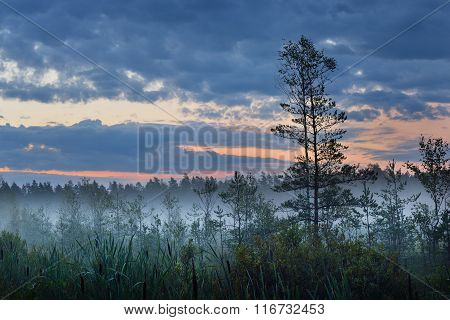 Swamp And The Morning Fog In Latvia