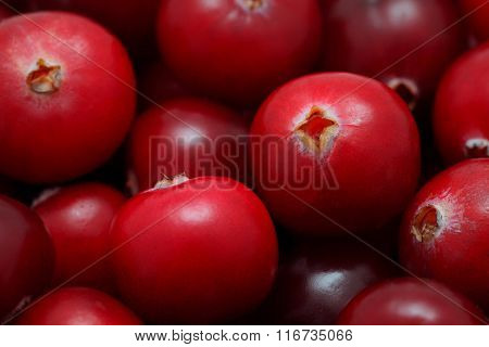 Close-up View On Pile Of Cranberry