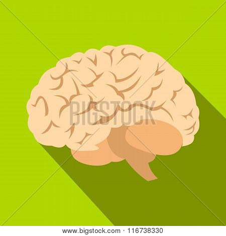 Human brain flat icon with shadow