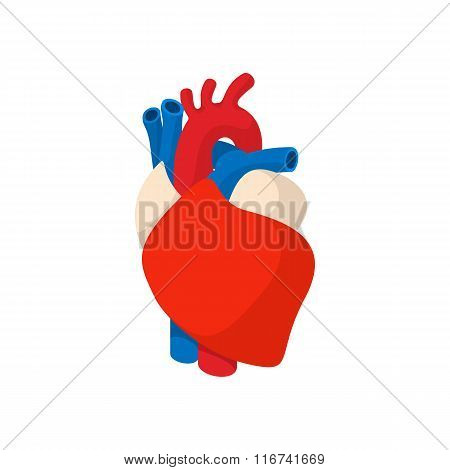 Human heart cartoon icon