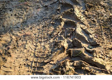 tractor tracks in mud, warm color background