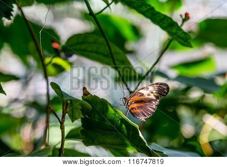 Brown And Black Butterfly On Green