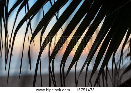 sunset on the beach through palm tree leaves