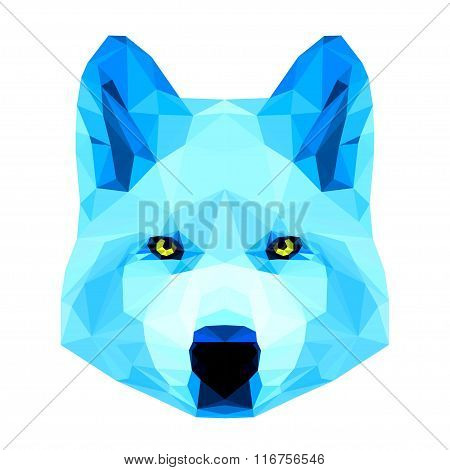Abstract Polygonal Geometric Triangle Bright Blue Wolf Portrait Isolated On White