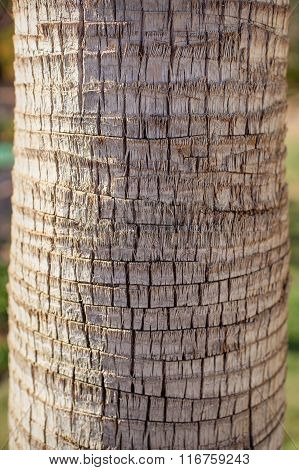 The Texture Of A Palm Tree Close Up