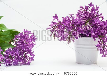 Flowers Violets In A Small Bucket Isolated Over White