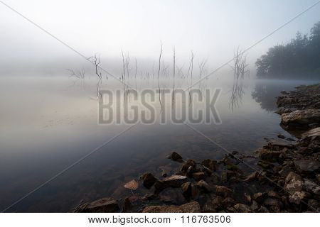 Foggy Lake With Trees