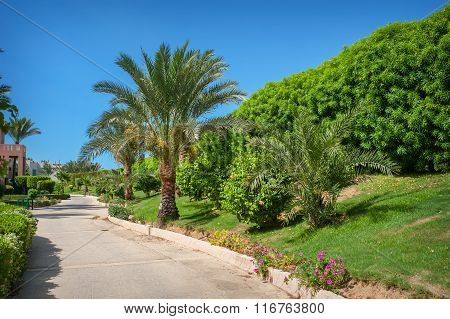 Beautiful Alley And Palm Trees In The Park In Egypt