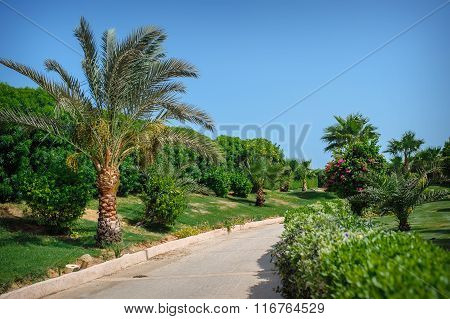 Palm Tree On The Edge Of The Road