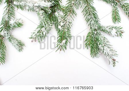 Snow-covered Fir Tree Branch On A White Background