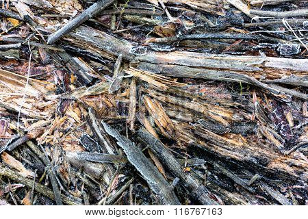 old  frozen woods - abstract natural background