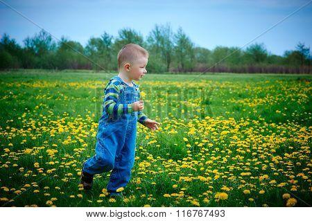 little boy walks on a meadow in spring