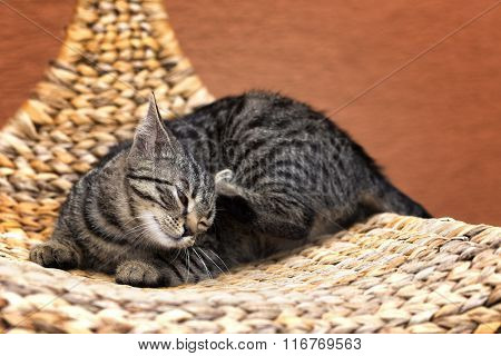 Scraping Cat On A Wicker Chair
