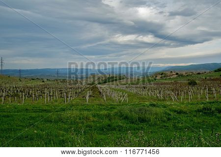 Landcape of Crimean vineries in spring, stormy weather and gray sky