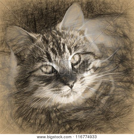 Digital Structure Of Painting. Painted Tabby Cat