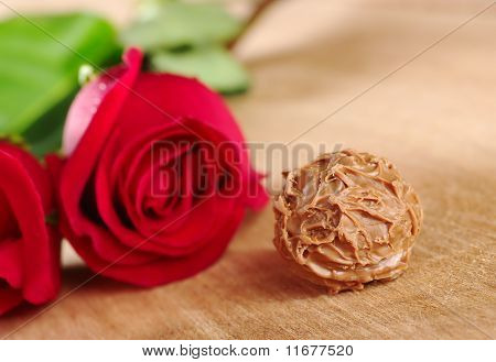 Truffle and Red Roses