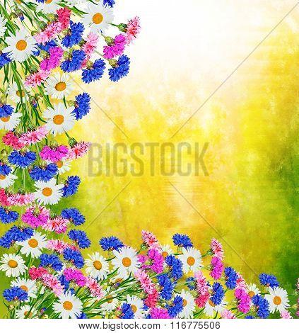 Wildflowers Daisies. Summer Landscape.