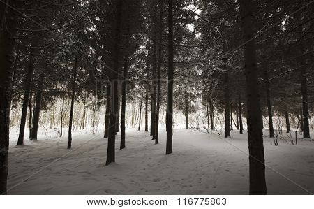 Winter park with snow on trees and floor