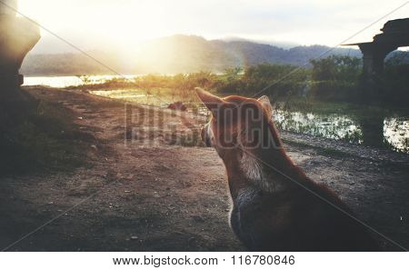 A Dog Rear View Lonely Sunset Holiday Concept