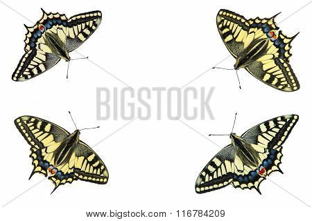 Butterflies on a white background - photo 5