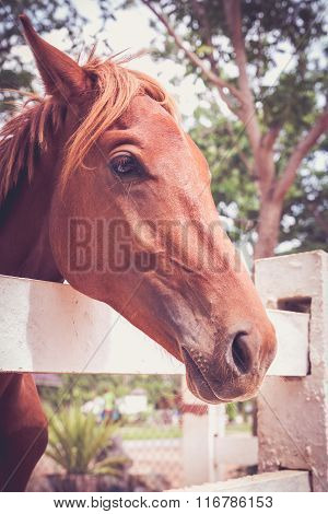 Horse Standing In The White Picket Fence And Nature Background.  Vintage And Retro