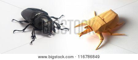 Origami Bug Sitting Near Real Bug On White Background