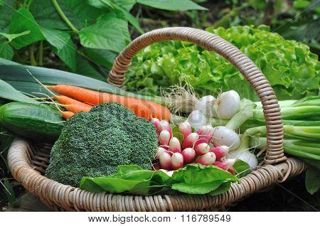 Full Vegetable Basket