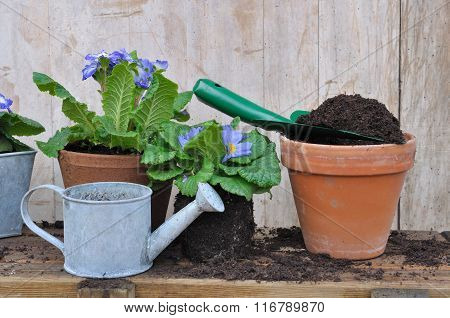 Compost For Potting Plants